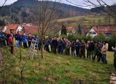 65 Personen, die sich für Naturschutz und Streuobstwiesen interessieren, kamen in Schindhard beim Baumschnittkurs zusammen
