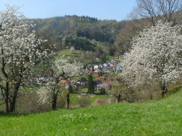 Blühende Streuobstwiesen in Dernbach