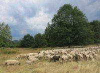 Osterzeit ist Lammzeit