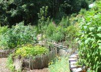 Gärtnern für die Artenvielfalt – Jardiner pour la biodiversité
