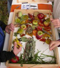 Gesund, lecker und gut für unsere Natur: regionales Obst
