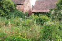 Frist für Teilnahme am Garten-Wettbewerb verlängert – jetzt bis 26. April möglich