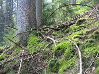 Urwald – Wo? Eine Exkursion zu einer Kernzone des Biosphärenreservats