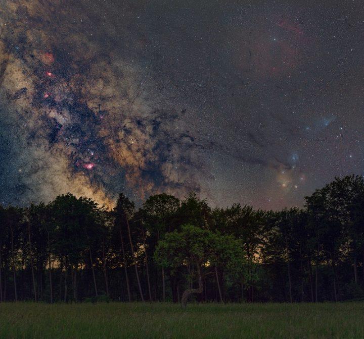 Hier sieht man eine gekrümmte Kiefer auf einer dunklen Wiese. Im Hintergrund sind weitere Bäume zu erkennen. Der Himmel über der Landschaft zeigt mit aber tausend Sternen das Milchstraßenzentrum in seiner bunten Pracht.