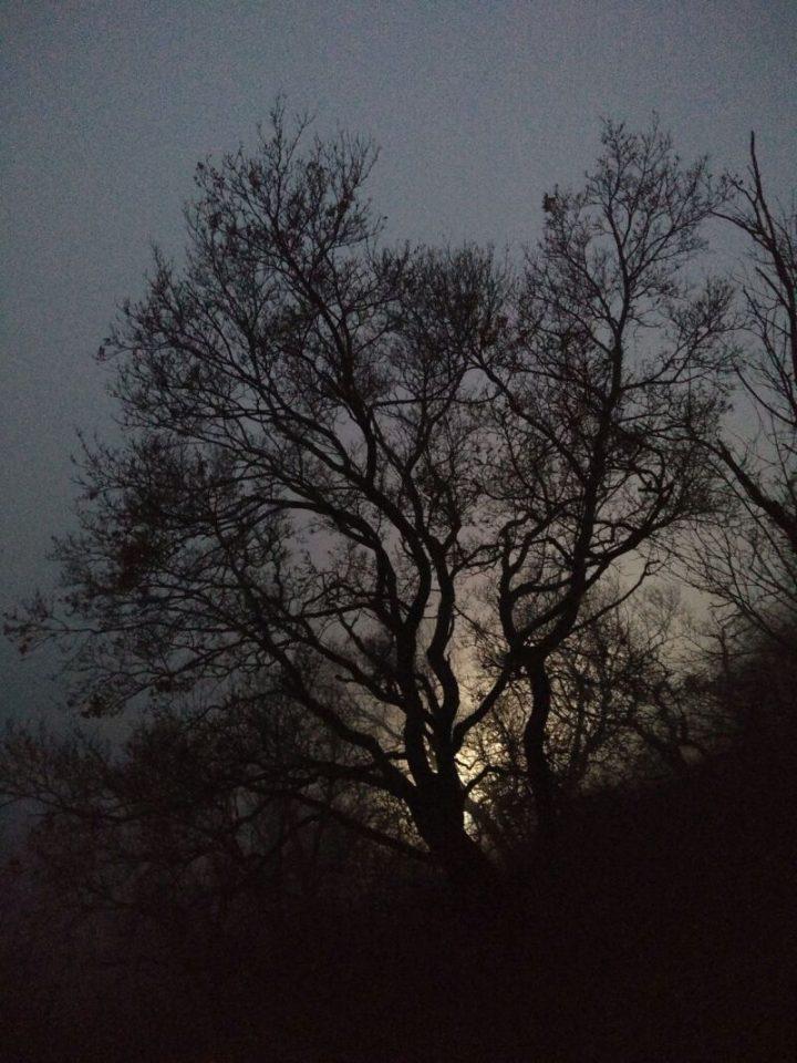 Eine Aufnahme der Abendstimmung im Pfälzerwald