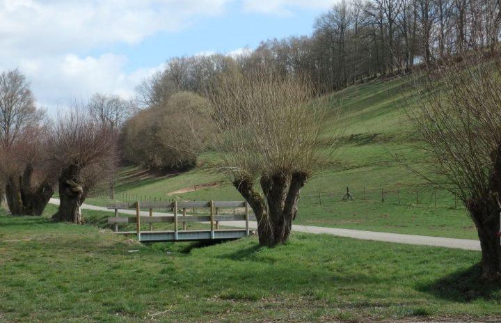 Ein Weg mit Kopfbäumen, bei Eschwiller im Elsass