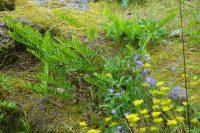 Trockenmauern: sommers wie winters ein wichtiger Lebensraum