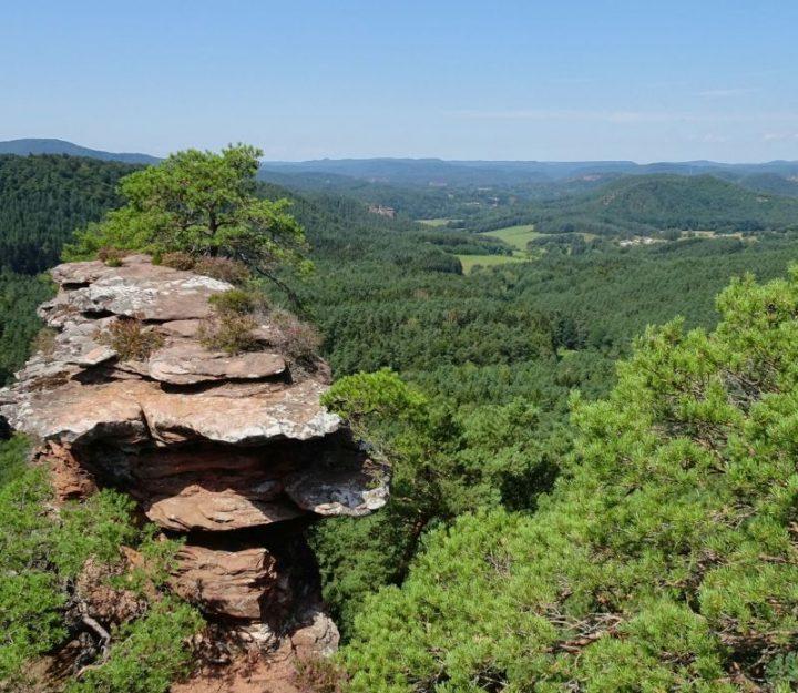 Ausblick vom Buchkammerfels bei Erlenbach im südlichen Pfälzerwald