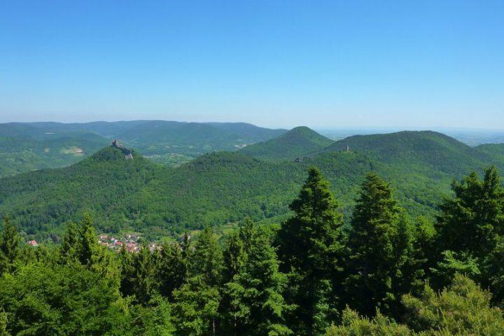 Ausblick auf den Trifels bei Annweiler