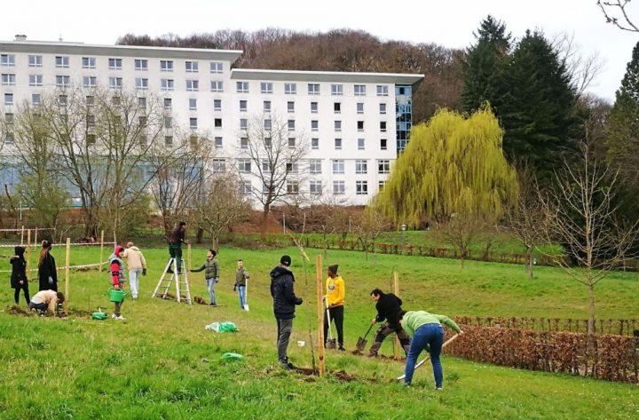 Schülerinnen und Schüler packen bei einer Obstbaum-Pflanzaktion in Bad Bergzabern an
