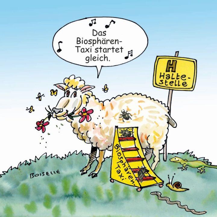 """Auf einer Illustration ist ein Schaf zu sehen, auf das INsekten krabbeln und zufliegen. In einer Sprechblase sagt das Schaf """"Das Biosphären-Taxi startet gleich."""""""