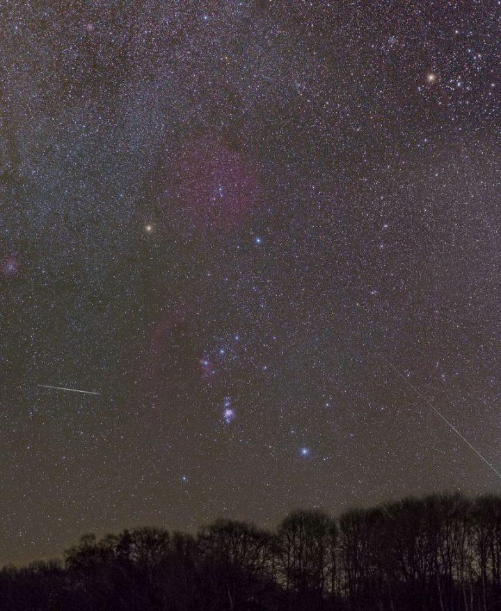Das Bild zeigt einen Streifen Wald aus dem Biosphärenreservat mit einem nächtlichen Himmel darüber, an dem sehr viele Sterne zu sehen sind.