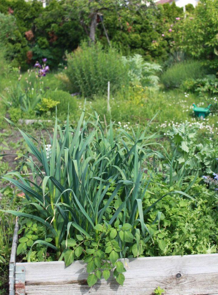 Blick in einen naturnahen Garten