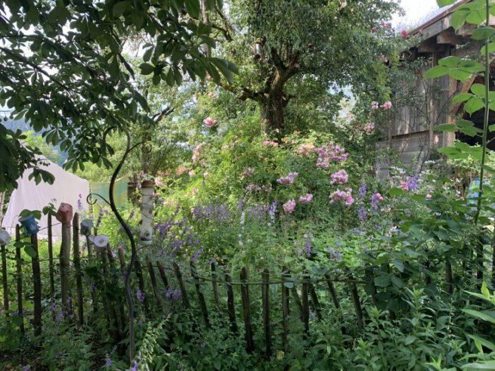 Ein blühender naturnaher Garten im Sommer