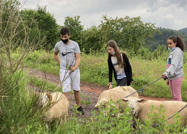 Das Bild zeigt Kinder mit Schafen bei Eußerthal