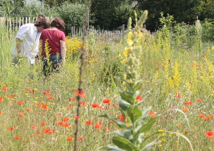 Das Bild zeigt eine blühende Wildkräuterwiese mit Menschen im Hintergrund