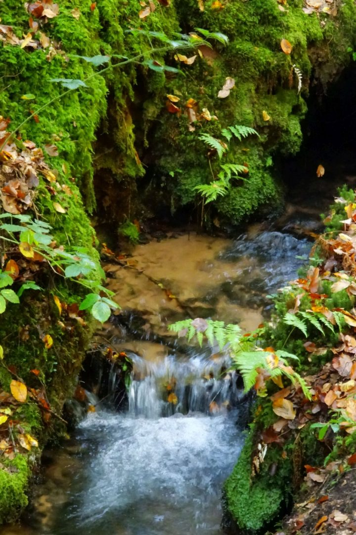 Das Foto zeigt einen Bach im Pfälzerwald