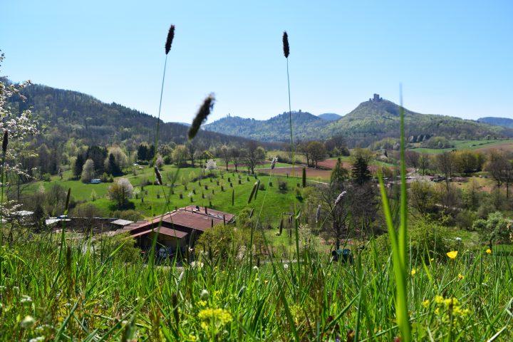 Das Bild zeigt eine Blumenwiese, im Hintergrund das Gut vor blauem Himmel und Bergen