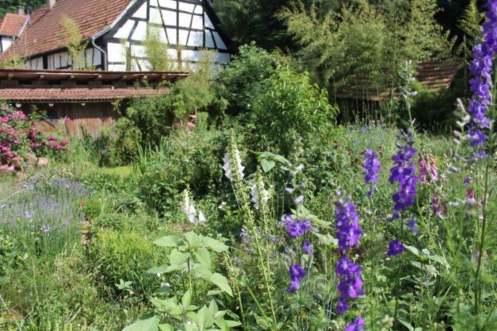 Das Bild zeigt einen Garten mit Blühpfalzen und einem Fachwerkhaus im Hintergrund