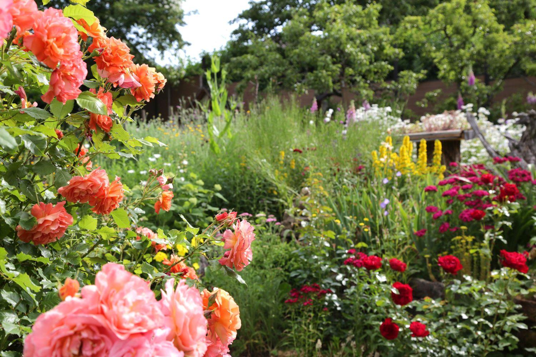 Das Bild zeigt einen Garten voller blühender Blumen