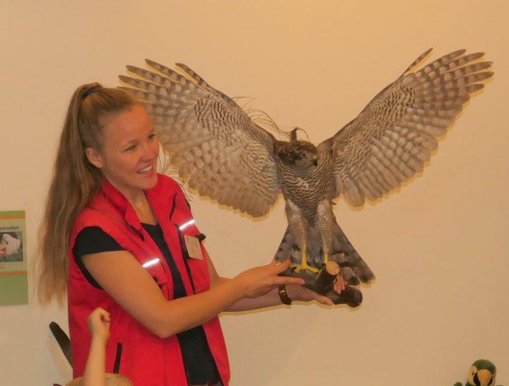 Das Bild zeigt eine Frau mit einem Greifvogel auf dem Arm, der seine Flügel ausbreitet