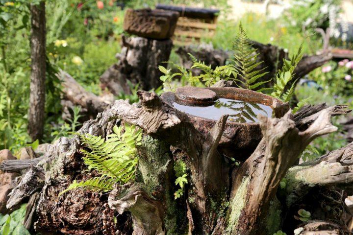 Das Bild zeigt eine Wasserstelle auf einem Baumstamm umgeben von Farnen